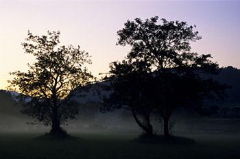 A misty morning in Glendalough